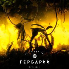 Травяной чай (зверобой и ромашка)  Состав: курильский чай, соцветия зверобоя, цветки ромашки, василька и бессмертника.  Сайт: gerbartea.ru