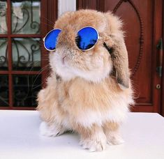 cute animals Mini-Pet Sunglasses for Rabbits! With these adorable Mini-Pet Sunglasses from Bunny Supply Co, you can dress your furry little friend up like the movie star they are! Baby Animals Pictures, Cute Animal Pictures, Animals And Pets, Animals In Clothes, Cute Little Animals, Cute Funny Animals, Cute Dogs, Cute Baby Bunnies, Funny Bunnies