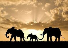 The elephants here create UNITY. They connect the whole picture together and are the same. The elephants are also all shaded black so they look together.