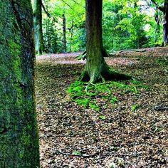 https://flic.kr/p/rXjp6Y | The woods.. #upsticksandgo #woods #green #trees #glenhowepark #wharncliffeside #uk #naturephoto #travelgram #travellingtheworld #explore #michfrost