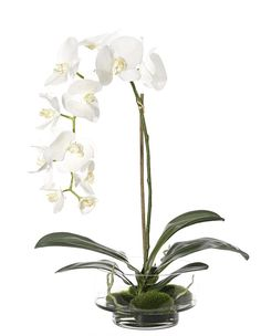 Natural Decorations, Inc. - Orchid Phalaenopsis White Glass Cylinder