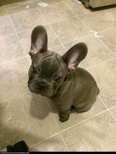 """Click visit site and Check out Cool """"French Bulldog"""" T-shirts. This website is superb. Tip: You can search """"your name"""" or """"your favorite shirts"""" at search bar on the top."""