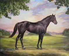Beautiful 8 x 10 canvas of the immortal Horse Portrait, Pencil Portrait, Horse Illustration, Horse Silhouette, Thoroughbred Horse, Horses And Dogs, Racehorse, All The Pretty Horses, Horse Farms