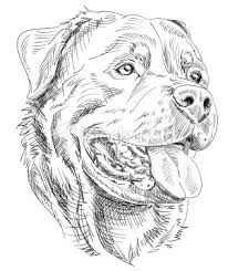 Image result for how to draw a rottweiler face