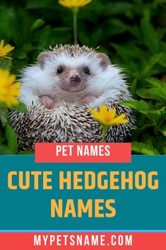 Do you have a tiny little hedgehog that makes you laugh everytime you spend time with them? Then choose from our list of funny and cute Hedgehog names, that has options like Hash Brown and Nibbles. Hedgehog Names, Hedgehog Pet, Cute Hedgehog, Cute Pet Names, Funny Names, Ancient Egyptian Cities, Norse Names, Happy Names, German Names