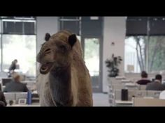 "Geico - Hump Day REMIX ""Guess What Day It Is"" Camel (FINAL) Happier than..."