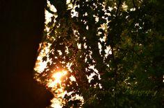 tree light 5-28-12   Flickr - Photo Sharing! ©ThompCyn Photography - Cynthia Harris http://www.thompcynphotography.com