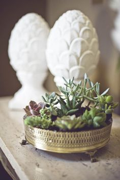 silver and succulents
