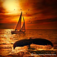 Sailing with the Whales by Istvan Kadar on 500px