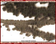 MARS FOREST LIFE BIO-DIVERSITY-6