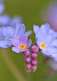 Forget Me Not by Peggy Collins
