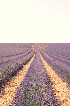 lavender...just beautiful