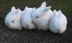 These buns were building the cutest wall known to man but the one on the right just fell asleep right then and there. | 23 Bunnies Snoozin'