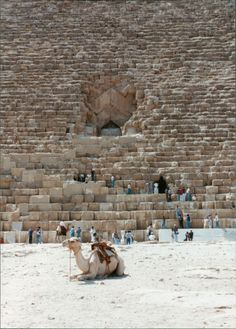 Entrance to the Great pyramid, Egypt