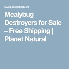 Mealybug Destroyers for Sale – Free Shipping | Planet Natural