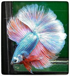 AquaBid.com - DT>>Goku(male)009