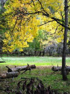 Bidwell Park in the Fall, Chico Ca