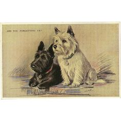 Scottie and Westie Vintage Postcard by Lucy Dawson aka Mac Cairn Terrier, Terrier Dogs, Scottish Terriers, Terrier Mix, Westies, Westie Puppies, Chihuahua Dogs, Doggies, Pet Dogs