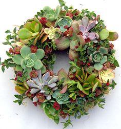 Succulent Wreath Secret Garden