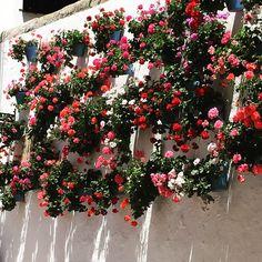 Marbella #Seville #Spain #Flowers #Pink #Red #Mediterranean