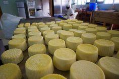 """Circa il 90% della produzione di formaggio della Njombe Milk Factory viene venduto a circa una trentina di resort e ristoranti di Dar Es Salaam e delle isole di Zanzibar e Mafia. Lì i proprietari sono di solito di origine italiana, ma anche parecchi indiani che si riforniscono da noi perché sono prodotti di qualità italiana, visto il know how """"made in Italy"""". Il prodotto più acquistato è la mozzarella da pizza ma anche la ricotta e la caciotta!"""