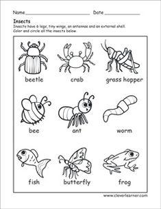 Insects identification preschool sheet