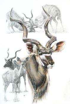 Kudu Drawing by Barbara Keith