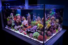 Reefkeeping Magazine - January 2016 Tank of the Month