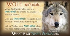 In-depth Wolf Symbolism & Wolf Meanings! Wolf as a Spirit, Totem, &…