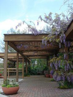 Perennial Garden arbor with wisteria at Powell Gardens