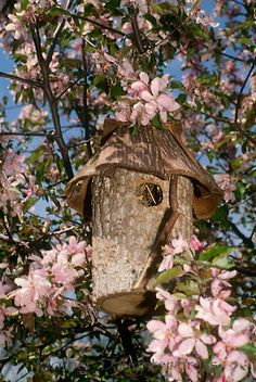 If I was a bird I think I'd like to live here.  :)