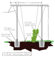 Trellis plans for growing hops
