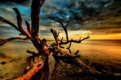Deadwood of Gili by raung binaia