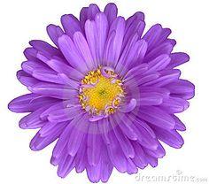 Papatya,success,daisy,purity,virgin,sun,happy,ba�arı,mutluluk,happiness,success