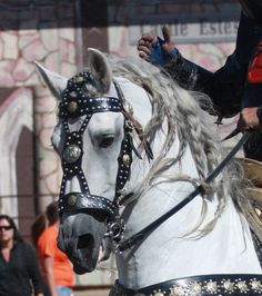 Look at that bridle and breastcollar!