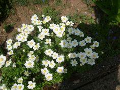 ...hier schon was Blühendes aus unserem Garten