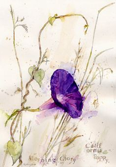 Morning Glory, watercolour, Kathy Lewis