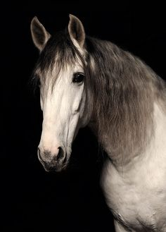 #horse #pictures #photography #animals