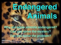 Endangered Animals: Interactive Facts, Writing Activities, and More. This includes a 35 page Powerpoint presenatation, as well as, a variety of writing activities designed for students to use higher level thinking and problem solving skills. Science Lessons, Teaching Science, Life Science, Teaching Ideas, Writing Activities, Science Activities, Animal Activities, Elementary Science, Upper Elementary
