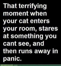 omg he does this all the time, I always assumed I was the weird one or had a crazy cat... apparently others notice cats doing this too! wwheeww it's not just me!