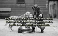 Frases Bonitas Para Todo Momento. : No sabía que se podía querer tanto a un animal, hasta que tuve uno, me enseño muchas cosas, pero la que más, querer sin condiciones.
