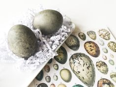 DANZIGER WUNDERKAMMER - Ostereier färben mit Hibiskustee (DIY)