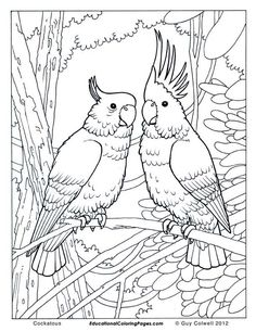 59. Free jungle bird coloring pages for adults - Cockatoo coloring printables - Enjoy Coloring