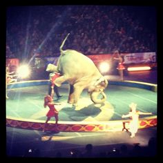 Elephant breakdancing at the circus!