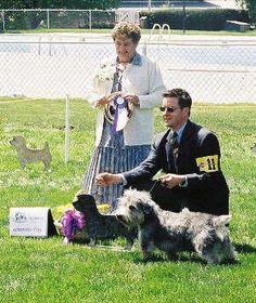 GITCA National Specialty 2001:  Oliver, Reserve Winner's Dog