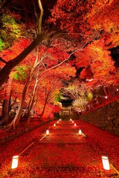 Crimson carpet - Autumn leaves in Bishamondo Temple, Kyoto, Japan Beautiful World, Beautiful Places, Beautiful Pictures, Foto Nature, Japan Landscape, Autumn Scenery, Japan Travel, Beautiful Landscapes, Nature Photography