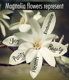 Magnolia flower symbolism and meaning Little Flowers, My Flower, Flower Art, Magnolia Trees, Magnolia Flower, Love Tattoos, New Tattoos, Tatoos, Henna Tattoos