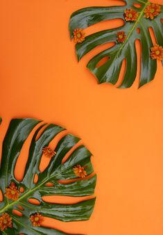 4k Background, Fantasy Background, Plains Background, Iphone Background Wallpaper, Orange Background, Background Vintage, Background Patterns, Background Ideas, Orange Aesthetic