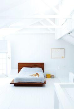 white room ginger cat - love