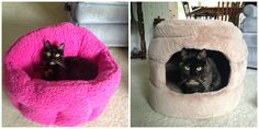 Urban Paw: Stylish and Comfortable Pet Beds from a Company That Cares